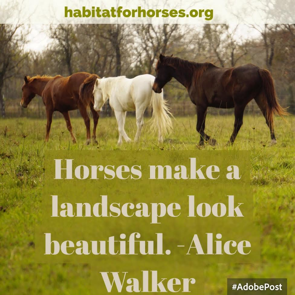 Blog Page 33 Of 241 Habitat For Horses