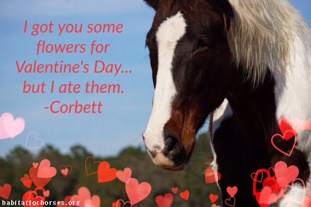 corbett valentine