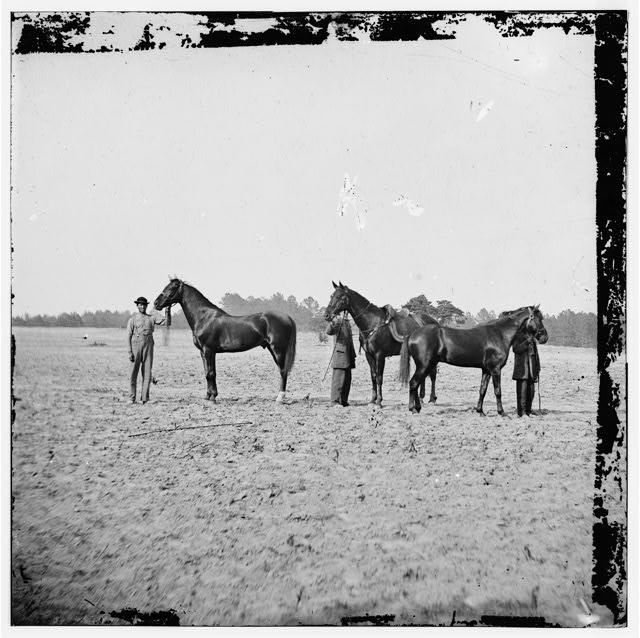 general-grants-horses