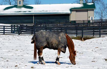 horse-wearing-winter-blanket