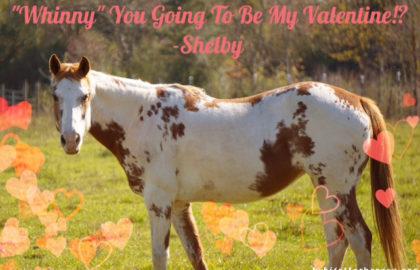 shelby valentine