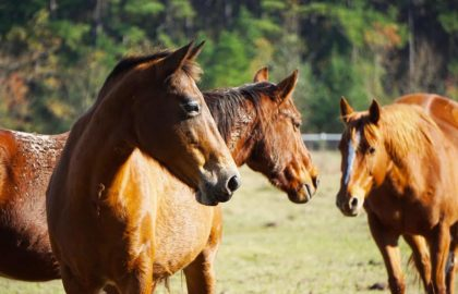 3-horses