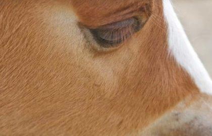 Foal-620×326