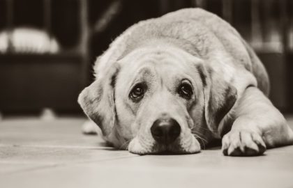 dog-1126025_1280