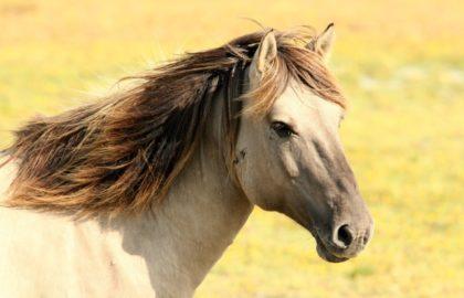 horse-animal