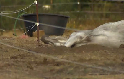 Holliston-horse-rescue-Recovered