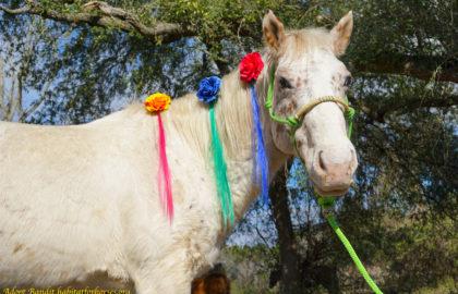 Bandit-unicorn-1