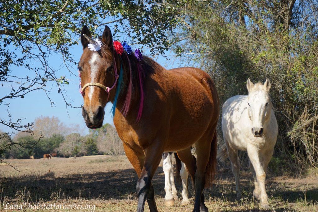 lana-unicorn-1