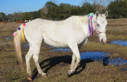 lariat-unicorn-08