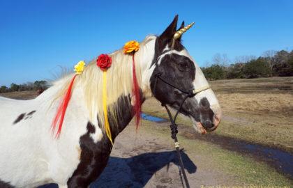 shane-unicorn-4