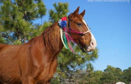 danher-unicorn-2
