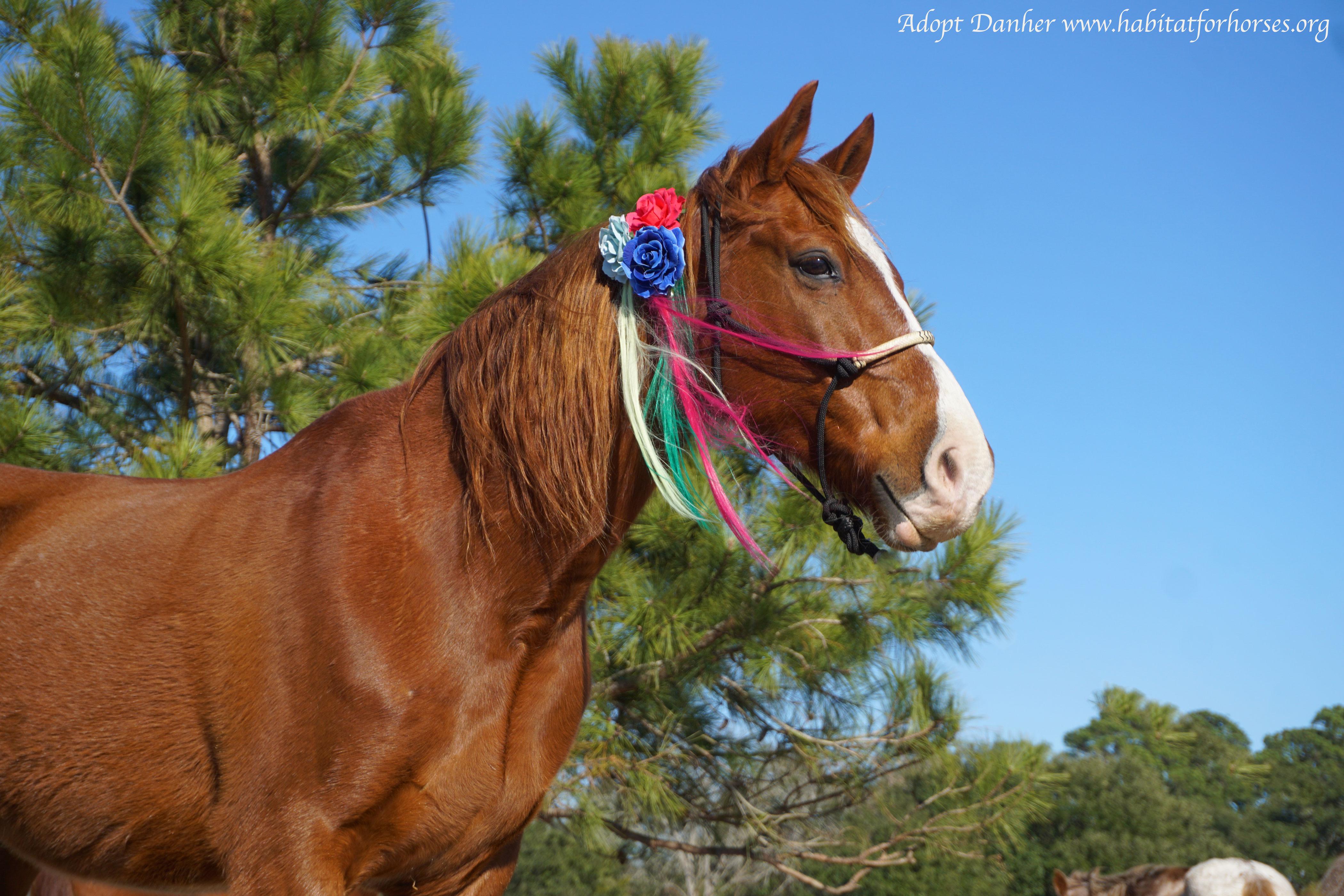 Ready to Ride - Habitat For Horses