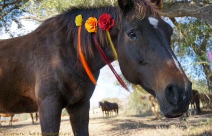 rosemarie-2-unicorn