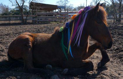 Mary-lou-11-unicorn