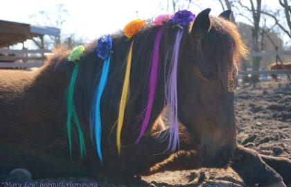 Mary-lou–unicorn-12