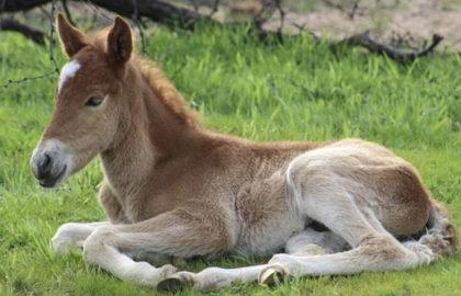 ducey-horse-facebook