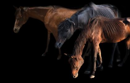 8-horse-slider