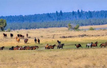 horses_1542144813213_6397965_ver1.0_640_360