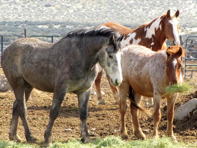 Wild horses from the Devl's Garden Wild Horse Territory