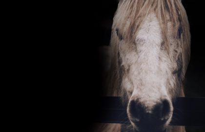 forgotten-horses-slider